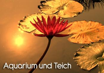 Kategorie Aquarium und Teich
